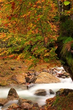 iPhone fondos de pantalla Naturaleza paisaje de otoño, río, árboles, musgo, hojas rojas