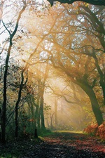 Preview iPhone wallpaper Nature forest, morning, autumn, road, light rays, sun
