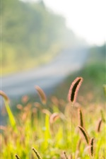 Preview iPhone wallpaper Nature, plants, grass, bokeh