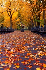 Preview iPhone wallpaper New York, autumn park, walk road, bench, yellow leaves, trees