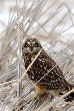 Preview iPhone wallpaper Owl in the grass at winter