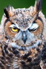 Preview iPhone wallpaper Owl portrait