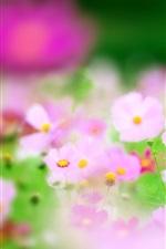 Preview iPhone wallpaper Pink flowers, focus, blur