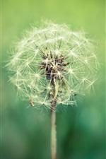 Preview iPhone wallpaper Plants close-up, dandelion, green blur background
