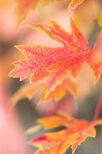 Preview iPhone wallpaper Red maple leaves, autumn, glare background