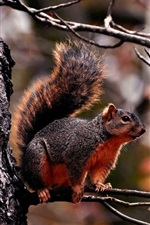 Preview iPhone wallpaper Red squirrel on the tree