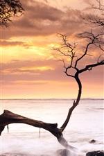 Preview iPhone wallpaper Sea, coast, tree, sunset, Hawaii, USA