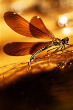 Preview iPhone wallpaper Summer, dragonfly, warm sun