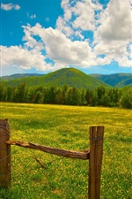 Preview iPhone wallpaper Summer landscape, grass, yellow flowers, fence, hills, clouds