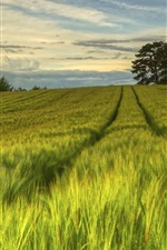 Preview iPhone wallpaper Sweden, nature scenery, green fields, trees, evening, summer