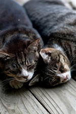 Preview iPhone wallpaper Two cats sleep at wooden board