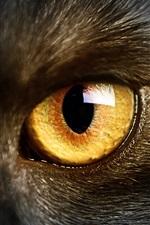 Wild black cat, yellow eyes, macro photography