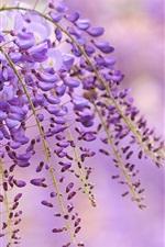 Aperçu iPhone fond d'écranWisteria fleurs pourpres, branche, fond flou