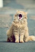 Preview iPhone wallpaper Cute cat yawns