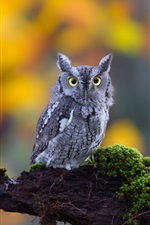 Preview iPhone wallpaper Cute little owl, moss, nature