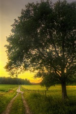 Preview iPhone wallpaper Fields, road, tree, morning, spring