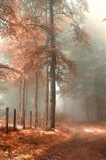 Forest, road, fence, fog, red, autumn landscape