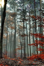 Preview iPhone wallpaper Forest, trees, autumn, fog, morning
