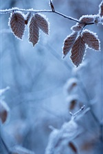 Preview iPhone wallpaper Forest winter, branches, leaves, frost
