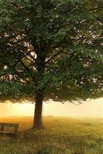 Morning park, meadow, trees, bench, mist, autumn