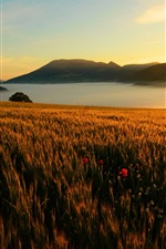 Preview iPhone wallpaper Mountains, fields, sky, flowers, sunrise, river