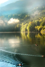 Preview iPhone wallpaper Mountains, forest, mist, lake, ducks, morning