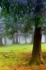 Preview iPhone wallpaper Nature scenery, forest, trees, morning, mist, fog