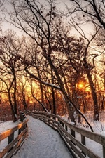 Preview iPhone wallpaper Nature winter landscape, snow, forest, trees, path, sunset