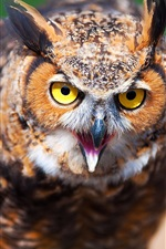 Preview iPhone wallpaper Owl face close-up, blur background