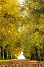Preview iPhone wallpaper Park, alley, benches, leaves, autumn, road