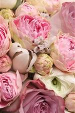 iPhone обои Розовые цветы, красивая роза, романтика