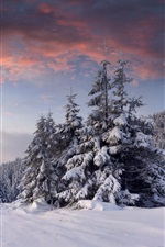 Preview iPhone wallpaper Snow, sunrise, clouds, winter, trees, forest