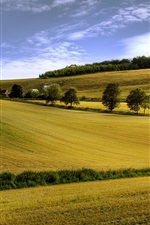 Preview iPhone wallpaper Summer field, yellow, trees, blue sky