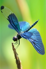 Preview iPhone wallpaper Twig, blue dragonfly