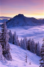 Preview iPhone wallpaper Winter, mountains, spruce, trees, snow, fog, clouds, sky, sunrise
