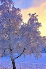 iPhone壁紙のプレビュー 冬の雪の木、霜、空、太陽、霧