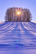 Preview iPhone wallpaper Winter snow, trees, sun rays, white