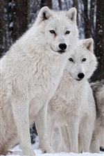 Preview iPhone wallpaper Wolves family, nature, winter