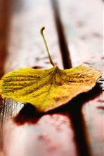 Preview iPhone wallpaper Yellow leaf on bench, water drops, autumn