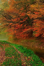 Preview iPhone wallpaper Autumn leaves, trees, forest, autumn, walk path, river