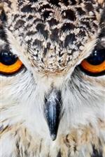 Bird, predator, owl