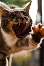 Cat funny posture, yawning, paw