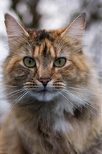 Preview iPhone wallpaper Cat portrait, blur background