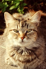 Preview iPhone wallpaper Cute cat, autumn, sunshine