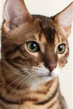 Preview iPhone wallpaper Cute kitten look