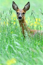 Preview iPhone wallpaper Grass, flowers, deer