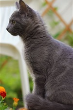 Preview iPhone wallpaper Gray cat standing, orange blue flowers