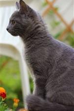 Gray cat standing, orange blue flowers