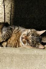 Vorschau des iPhone Hintergrundbilder Grau gestreifte Katze, schlafen, Sonnenschein