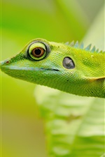 Preview iPhone wallpaper Green lizard, eyes, blur
